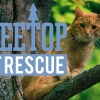Animal Planet is yet to renew Treetop Cat Rescue for season 2