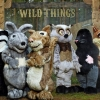 Sky1 is yet to renew Wild Things for series 3