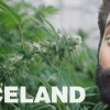 Viceland has officially renewed Weediquette for season 3